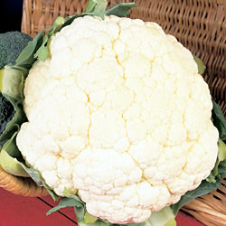 Cauliflower All Year Round Seeds