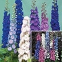 Delphinium New Zealand Duo 2 packets - 1 of each (22 seeds in total)