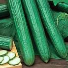 Cucumber Long Crop Seeds (Gro-sure)