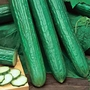 Cucumber Long Crop Seeds (Gro-sure)