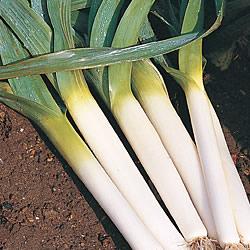 Leek Oarsman Seeds (Gro-sure)