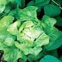 Lettuce Hilde II Seeds