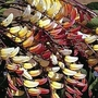 Mina Lobata 1 packet (16 seeds)
