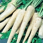 Hamburg Parsley Berliner Seeds