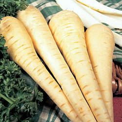 Parsnip Albion Seeds (Gro-sure)