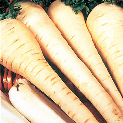 Parsnip White Gem Seeds