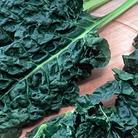 Spinach Beet Popeye Seeds