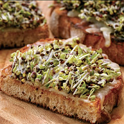 Sprouting Seed Broccoli