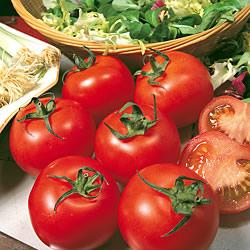 Tomato Yellow Perfection Seeds