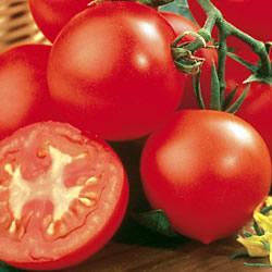 Tomato Shirley Plants x6