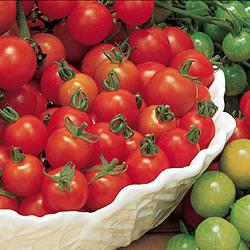 Tomato Sweet Million Plants x3 (Bush)