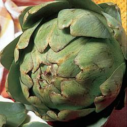 Artichoke Green Globe Plants