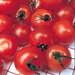Tomato Gardener's Delight Plants x3 (Cordon)