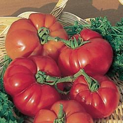 Tomato Super Marmande Plants x3