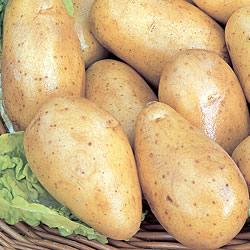 Charlotte Seed Potatoes (Salad)