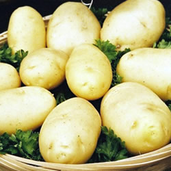 Arran Pilot Seed Potatoes (First Early)