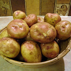 King Edward Seed Potatoes (Maincrop)