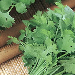 Coriander Fine Leaved Seeds