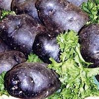 Potato : Minituber : Congo 10 tubers