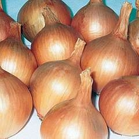 Onion 'Hercules' 2 packs