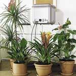 Oasis Indoor Self-Watering System