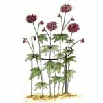 Plant Support Cradles