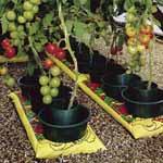 Grow Pots (Pack of 3)