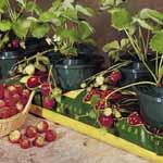 Mini Grow Pots