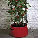 Tomato Patio Planter and Frame