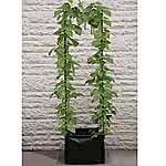 Pea and Bean Patio Planter
