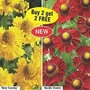 Helenium Collection 1 bareroot plant - 1 of each