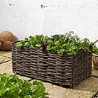 Salad Planting Bag and Natural Willow Surround