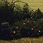 Solar Creature Lights - Lucy Ladybird and Friends