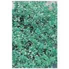 Euonymus Emerald Gaiety x 1 litre pot
