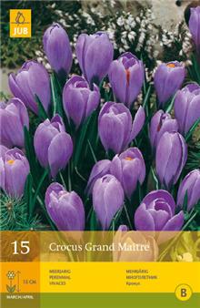 Crocus 'Grand Maitre'
