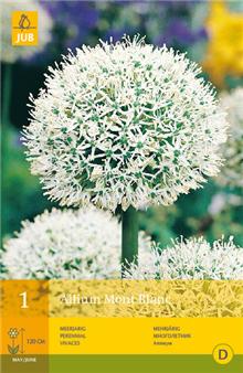 Allium 'Mont Blanc' | Bulb Packs