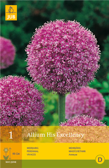Allium 'His Excellency' | Bulb Packs