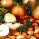 onion 'Senshyu Semi Globe Yellow' (onion sets)