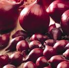 onion 'Electric' (onion sets)