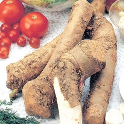 Horseradish Roots 5 Roots