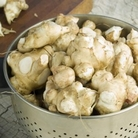 Jerusalem Artichoke - Common 25 Tubers