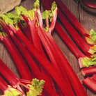 rhubarb 'Strawberry' (rhubarb Strawberry crowns)