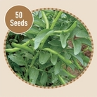Broadbean Bunyards Exhibition 50 Seeds