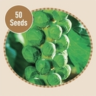 Brussels Sprout Bosworth F1 50 Seeds