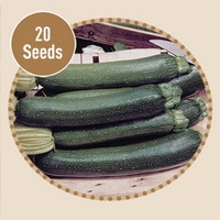 Courgette Tristan F1 20 Seeds