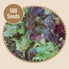 Mixed Salad Baby Leaf 500 Seeds