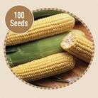 Sweetcorn Earlybird F1 100 Seeds
