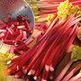 rhubarb 'Victoria' (rhubarb Victoria crown)
