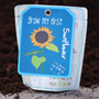 Sunflower   children's grow pack