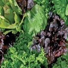 Salad Leaves Unwins Special Mixed Seeds